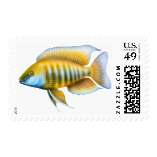 Aulonocara African Peacock Cichlid Postage