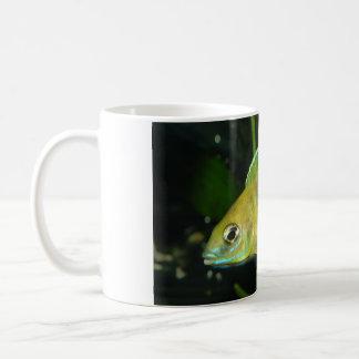 Aulonocara Baenschi Cichlid Coffee Mug