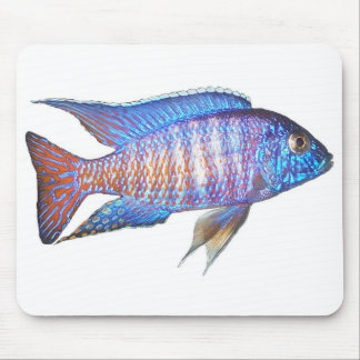 Aulonocara peacock mouse pad