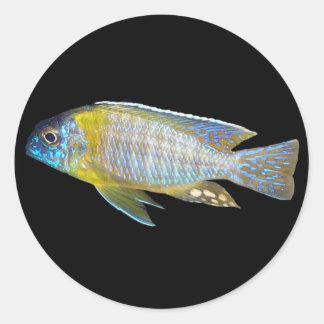 Aulonocara steveni male peacock sticker