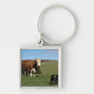 Aunque las vacas y los perros sean de diferente llavero cuadrado plateado