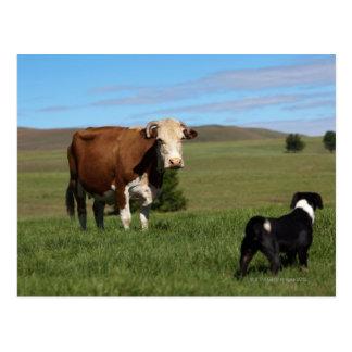 Aunque las vacas y los perros sean de diferente postal