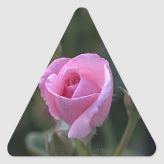 Aunt Dorothy s Pink Rose Triangle Stickers