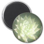 Auric Lotus Magnet