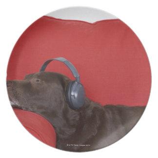 Auriculares que llevan de Labrador que mienten en Platos De Comidas