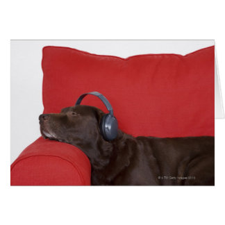 Auriculares que llevan de Labrador que mienten en  Felicitaciones