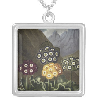 Auriculas from Dr John Robert Thornton's Silver Plated Necklace