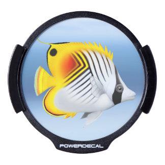 Auriga Threadfin Butterflyfish LED Auto Decal