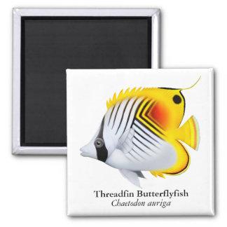 Auriga Threadfin Butterflyfish Magnet