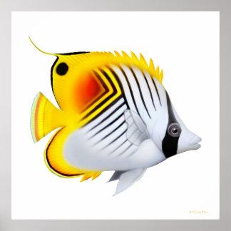 Auriga Threadfin Butterflyfish Poster