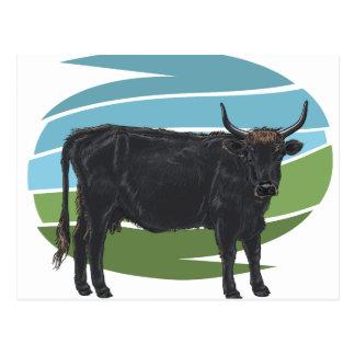 Aurochs Postcard