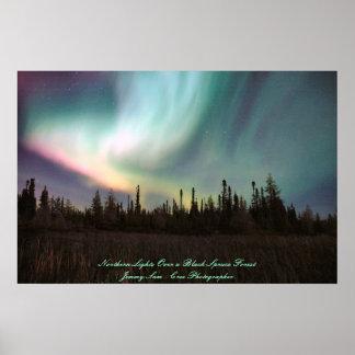 Aurora boreal sobre un bosque de la picea negra póster