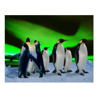 Aurora borealis and penguins postcard