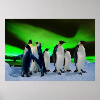 Aurora borealis and penguins posters