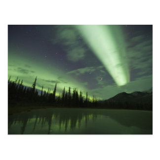 Aurora borealis are reflected in tundra pond postcard