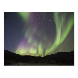 Aurora Borealis dance over Koyukuk River Postcard