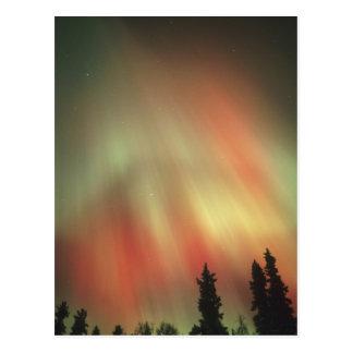 Aurora Borealis, Northern Lights, Fairbanks Postcard