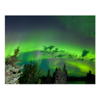 Aurora borealis over boreal forest postcard