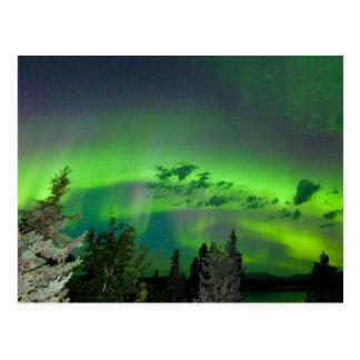Aurora borealis over boreal forest postcard