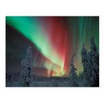 Aurora de Alaska Borealis Tarjetas Postales