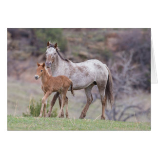 Aurora & Filly-Galloping to Freedom Greeting Card