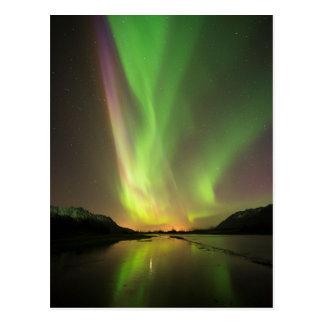 Aurora multicolora postal