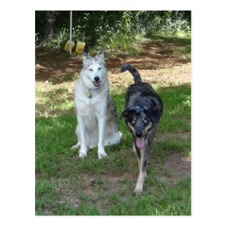 Ausky Dog and Catahoula Leopard Dog Friends Postcard