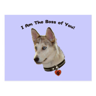 Ausky Dog Boss of You Postcard