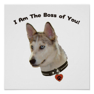 Ausky Dog Boss of You Poster