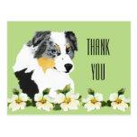 Aussie Blue Merle Dog Thank You Postcard