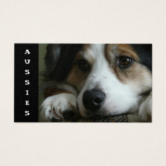 Aussie  Business Card for Breeders