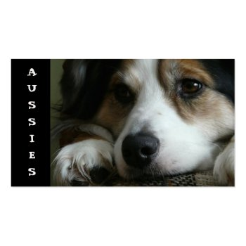Aussie Australian Shepherd Business Card for Breeders