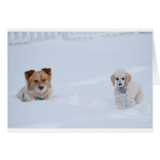 Aussie Dog and Poodle in Snow-no place like home Greeting Cards