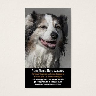 Aussie Dog Breeder Australian Shepherds Business Card