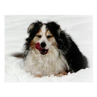 Aussie Dog Tongue Postcard