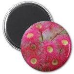 Aussie Gum Blossom Refrigerator Magnet