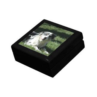 Aussie Herd Dog Gift Box
