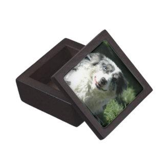 Aussie Herd Dog Premium Gift Box