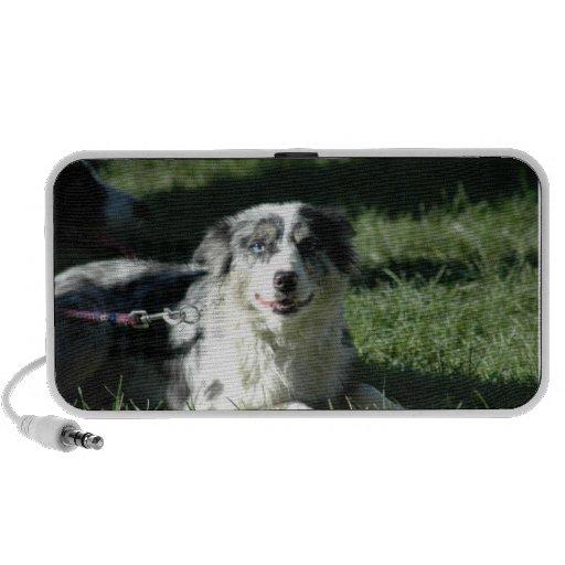 Aussie Herd Dog Speakers