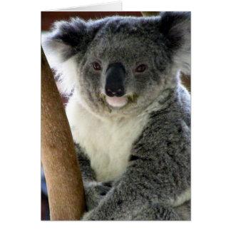 aussie koala card