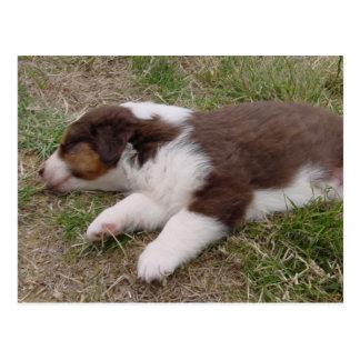 aussie puppy sleeping post card