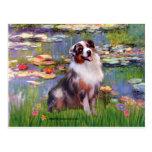 Aussie Shep 1 - Lilies #2 Postcard