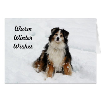 Aussie Shepherd Dog in Snow Card