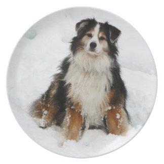 Aussie Shepherd Dog in Snow Melamine Plate