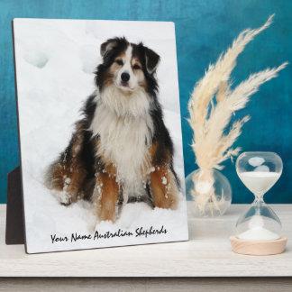 Aussie Shepherd Dog in Snow Plaque