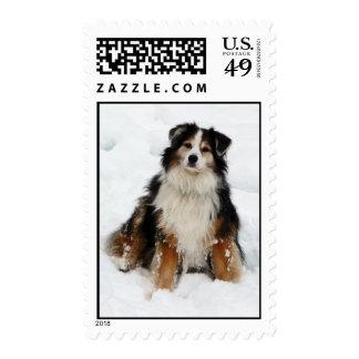 Aussie Shepherd Dog in Snow Postage Stamps