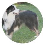 Aussie Shepherd Plate