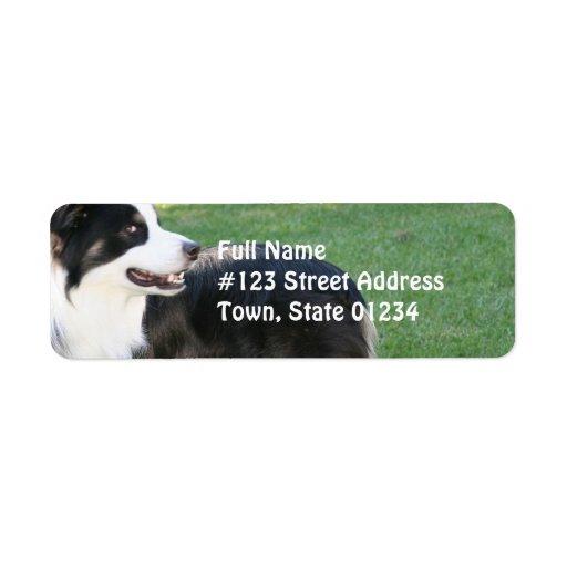 Aussie Shepherd Return Address Mailing Labels