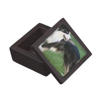 Aussie Shepherd Small Gift Box