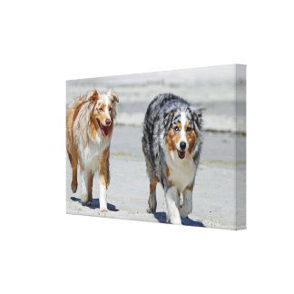 Aussies - 1st Day of Summer Beach Stroll Stretched Canvas Print
